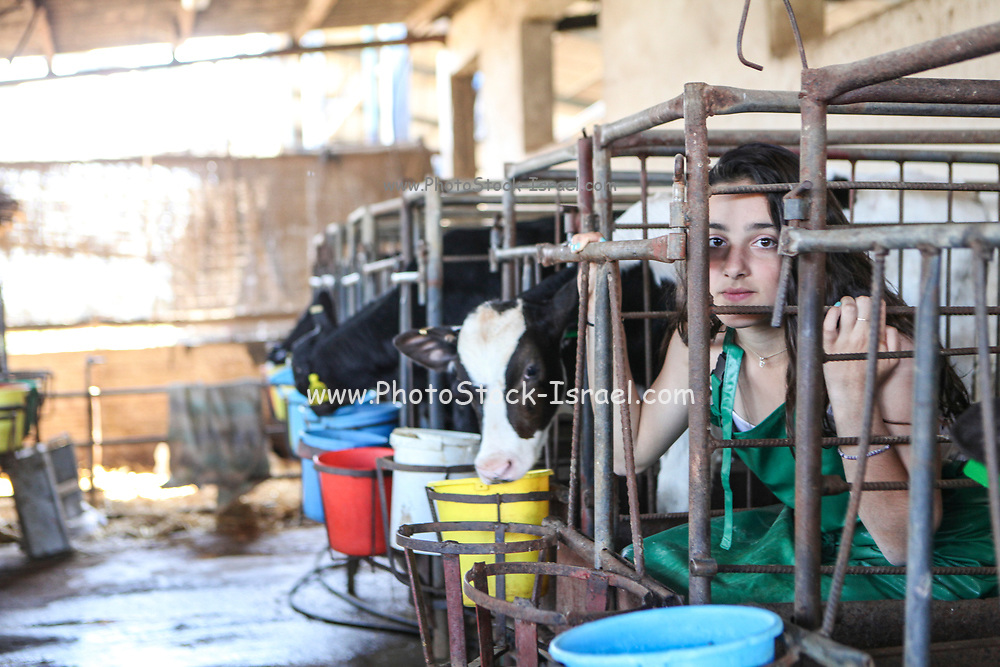 Young teen animal rights protestor locked in a cage with the calves on a dairy farm