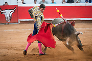 Spanish bullfighter Paco Urena performs with a bull at the Plaza de Toros bullring March 3, 2018 in San Miguel de Allende, Mexico.