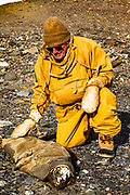 Mummified crabeater seal, Dry valley scientist from 1950s, Dr Richard Barwick, Lower Taylor Dry Valley, Victoria Land