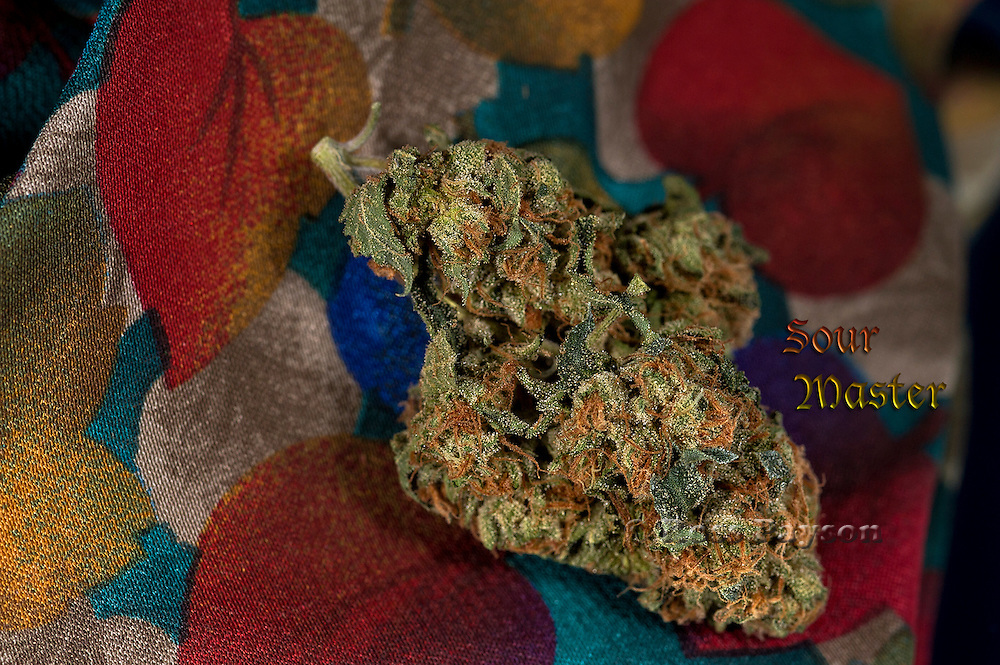 Sour Master nug photographed in a professional studio.