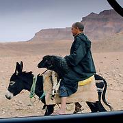Sheep on Donkey, Tamnougalt, Morocco (November 2006)