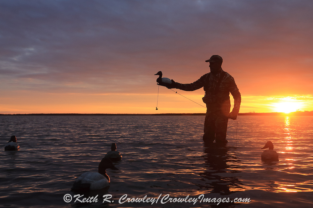 Placing diver decoys in early morning light on the Delta Marsh in Manitoba, Canada.
