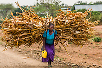 Woman carrying sorghum cane, Southern Nations Nationalities and People's Region, Ethiopia.