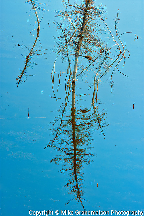 Reflection of tree snags in Sulphur Lake<br />Kluane National Park<br />Yukon<br />Canada