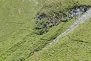 View of the Holly Hut Track, on the slopes of Mount Taranaki, Egmont National Park, New Zealand.