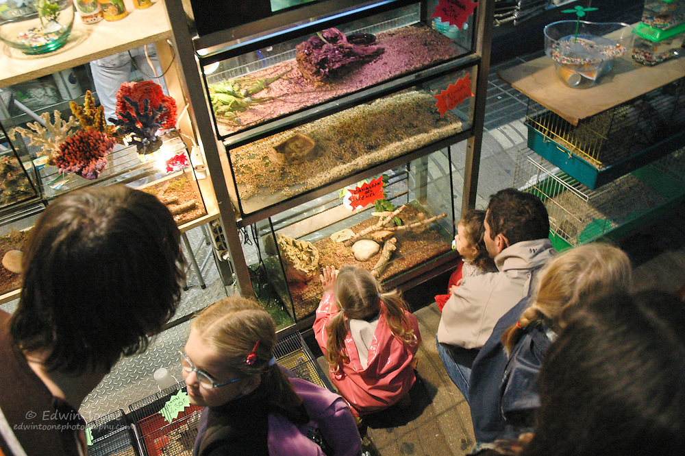 One of the main attractions for children are the animal stands where lizards, rabbits, and chickens can be boutght.