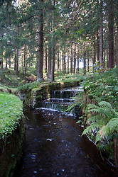 View of Dyke ditch at Harz National Park
