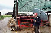 Italie, Carditello, 6-3-2008..Een boer, veeboer en eigenaar van waterbuffels op een kleine veehouderij in de regio Napels, in Campania. Van hun melk wordt de beroemde mozzarella kaas gemaakt. De streek kampt echter met grote afval en vervuilingsproblemen. De mozarella bevat vaak te veel dioxine omdat vuilstortplaatsen in de omgeving giftige stoffen in de bodem afgeven, wat in het veevoer voor de buffels terecht komt. Italië..Foto: Flip Franssen