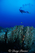 diver explores formation where waves eroded <br /> volcanic ash deposits ( tuff ) at ancient shoreline, <br /> south shore, Oahu, Hawaii, USA ( Pacific ) MR 288
