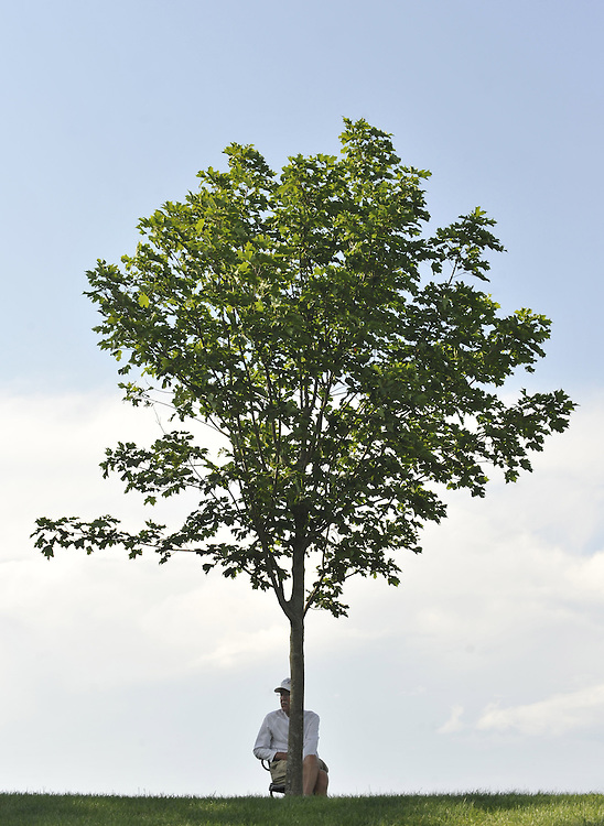 Jack Lynch of East Hartford, finds shade behind a tree on the fourth hole during the first round of the Travelers Championship golf tournament on Thursday, June 24, 2010, in Cromwell, Conn. (AP Photo/Jessica Hill)