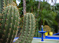 MARRAKESH, MOROCCO - CIRCA APRIL 2017: Cactus with fountains and palm trees at the Jardin Majorelle in Marrakech