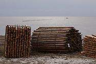 Gereedliggende palen voor plaatsing haaks op de kust. De lengte van de palenrij wordt zo'n 500 meter.