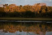 Aquidauana_MS, Brasil...Mata ciliar de um lago na Fazenda Rio Negro no Pantanal...The lake riparian in the Rio Negro farm in Pantanal...Foto: JOAO MARCOS ROSA / NITRO