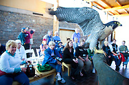 National Geographic Sea Lion's trip to the Eastern Columbia River Gorge. Visitors are treated to a raptor exhibit at the Columbia Gorge Discovery Center in The Dalles.  Pictured here is a peregrin falcon.