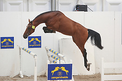 Carrera VDL<br /> Hengstenkeuring<br /> World Championship Young Horses Lanaken 2009<br /> © Hippo Foto - Leanjo de Koster