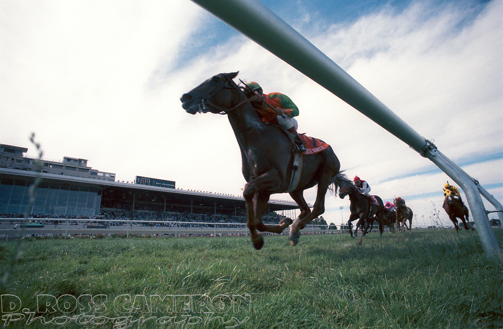 Horses running in the San Francisco Handicap come down the home stretch at Bay Meadows race track in San Mateo, Calif., Monday, Sept. 6, 1993. (D. Ross Cameron/Daily Review)