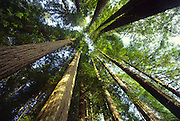 Jedediah Smith Redwoods State Park, California<br />