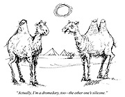 """""""Actually, I'm a dromedary, too - the other one's silicone."""""""
