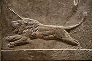 Assyrian relief sculpture panel of a lion being hunted.  From Nineveh  North Palace, Iraq,  668-627 B.C.  British Museum Assyrian  Archaeological exhibit .<br /> <br /> If you prefer to buy from our ALAMY PHOTO LIBRARY  Collection visit : https://www.alamy.com/portfolio/paul-williams-funkystock/ancient-assyria-antiquities.html  Refine search by adding background colour, place, subject, museum etc into the LOWER SEARCH WITHIN GALLERY box to <br /> <br /> Visit our ANCIENT ASSYRIAN PHOTO COLLECTIONS for more photos to download or buy as wall art prints https://funkystock.photoshelter.com/gallery-collection/Ancient-Assyrian-Art-Artefacts-Antiquities-Historic-Sites-Pictures-Images-of/C0000cjRqQyJjLag