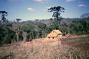 Wooden farmhouse building under construction in pine forest, near Laranjeiras do Sol,  Paraná state