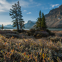 Rime ice coats the leaves of willows and other bushes growing beside Bow Lake in Banff National Park, Alberta, Canada.  Behind are (L to R) Mount Andromache, Mount Hector, Bow Peak, Bow Crow Peak and Crowfoot Mountain.