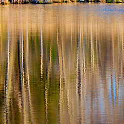 Trees reflect in a pond in Rye, New Hampshire.