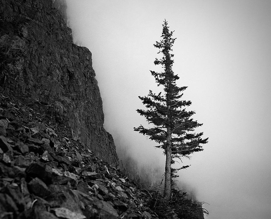 Yamnuska Lone Tree, AB