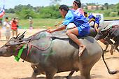Pattaya Buffalo races