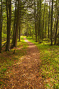 A path leads through the woods at The Ridges Sanctuary near Baileys Harbor, Door County, Wisconsin.