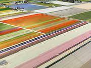Nederland, Noord-Holland, Gemeente Anna Paulowna, 16-04-2012; bollenvelden in de Anna Paulownapolder..Flower fields (bulb fields) in the Anna Pavlovna Polder..luchtfoto (toeslag), aerial photo (additional fee required);.copyright foto/photo Siebe Swart