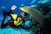 diver guide feeds green moray eel,<br /> Gymnothorax funebris, at Stingray City,<br /> Cayman Islands ( Caribbean Sea )   MR 172
