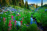 Wildflowers lining a creek along Naches Peak trail in Mount Rainier National Park