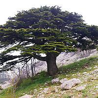 Esh-Shouf Cedar Reserve