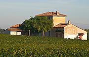 Chateau Lafleur and vineyard, Pomerol, Bordeaux