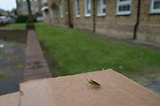 Green bug sitting on top of a cardboard box in London, England, United Kingdom.