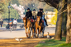 © Licensed to London News Pictures. 30/03/2021. London, UK. Cavalry ride through Hyde Park, London as weather forecasters predict highs of 23c in London and the South East today. From yesterday, two households or six people are now allowed to meet up marking the end of the Stay at Home advice. Playing golf, tennis and organised outdoor sports is also allowed as England starts to unlock after a year of Covid-19 restrictions. Photo credit: Alex Lentati/LNP