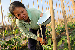Mrs. Khom (ກົມ) and Mr. Jod (ຈອດ)<br /><br />[with sticks]<br /><br />• Crop: long bean<br /><br />• Income: 8 to 20 million kip, depending on demand<br /><br />• Source of water: River<br /><br />• Family number: 4 (2 kids)<br /><br /><br />Phonthan Village, Phonhong District, Vientiane Province