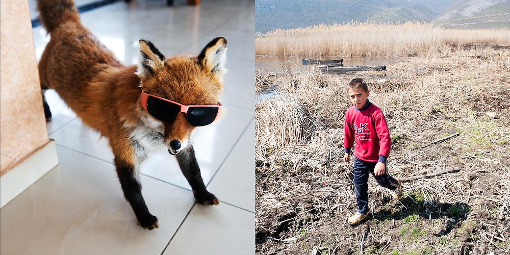 Fox with sunglasses  / Kid