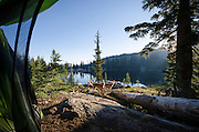 View of dogs (golden retrievers) from a tent at Bull Run Lake, Carson-Iceberg Wilderness, Stanislaus National Forest, California