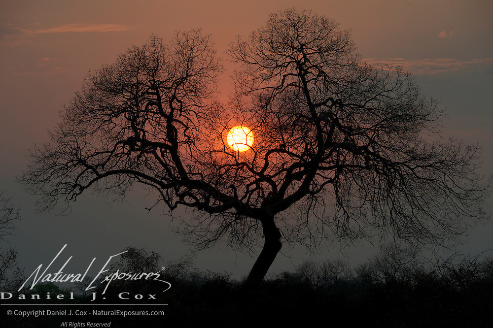 Sun setting over the bush in Londolosi Game Reserve, South Africa.