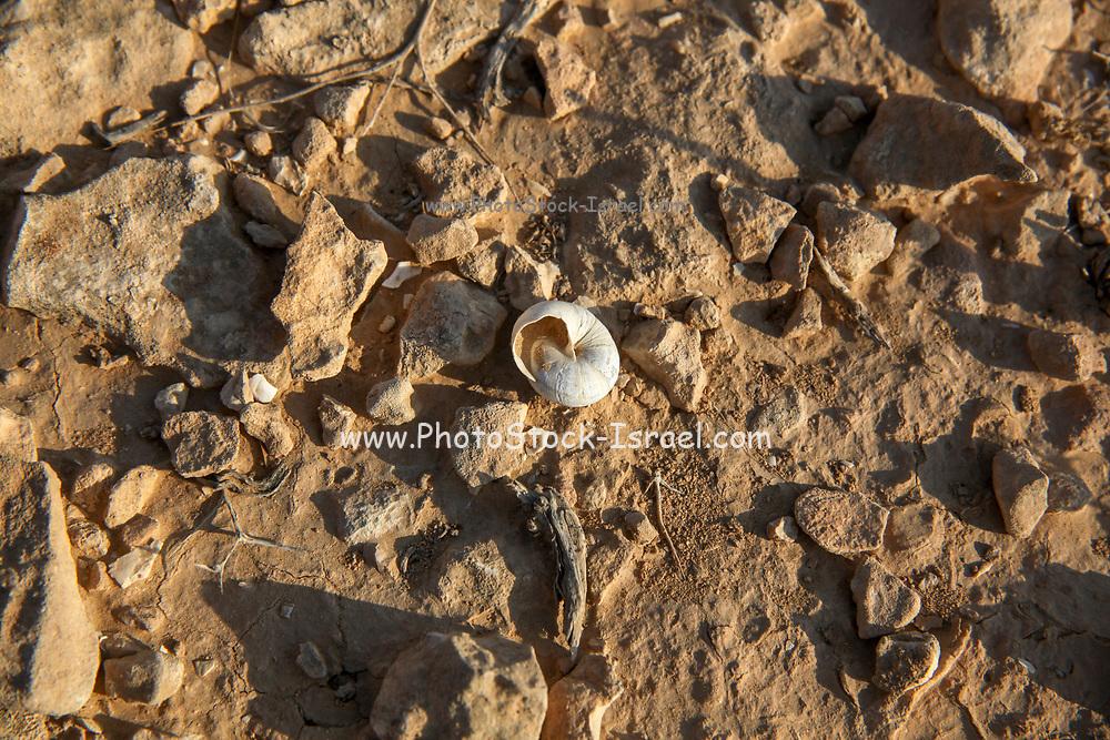 Israel, Negev desert plains, empty snail shells