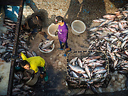 27 OCTOBER 2015 - YANGON, MYANMAR: Unloading fish from the hold of a trawler in the market at Aungmingalar Jetty in Yangon. The market is home to one of the largest fish markets in Yangon and a meat and produce market.    PHOTO BY JACK KURTZ