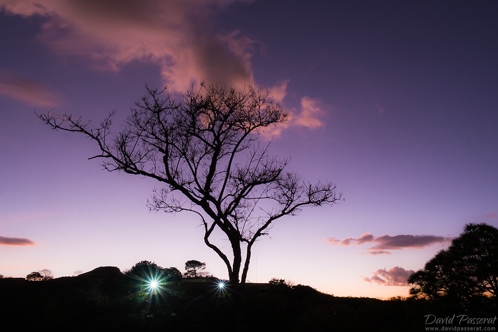 Tree of Monte Alban