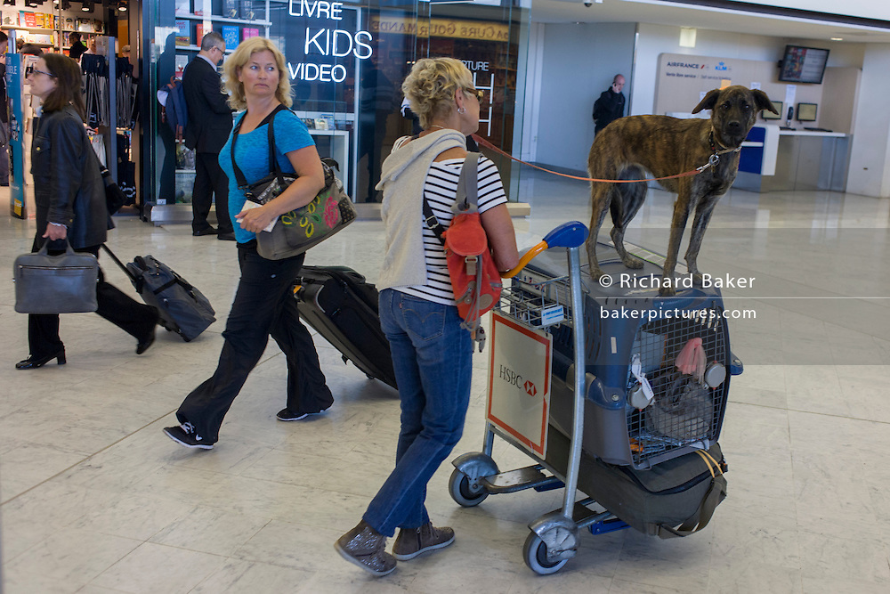 Pet dog rides on top of an airline animal cargo box in the main terminal of Paris Orly airport.