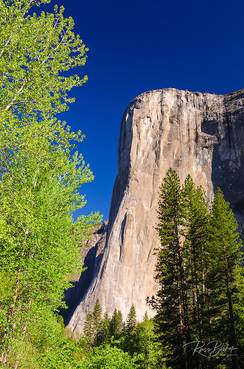 Morning light on El Capitan, Yosemite National Park, California