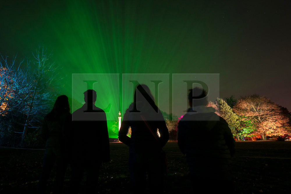 © Licensed to London News Pictures. 11/11/2018. LONDON, UK.  Visitors are seen in silhouette in The Enchanted Woodland which has opened to the public again at Syon House in West London.  An illuminated trail takes visitors through gardens designed by Capability Brown, round an ornamental lake and ends at the spectacular Great Conservatory.   Photo credit: Stephen Chung/LNP