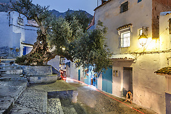 Olive tree and street at dusk, Chefchaouen, Morocco