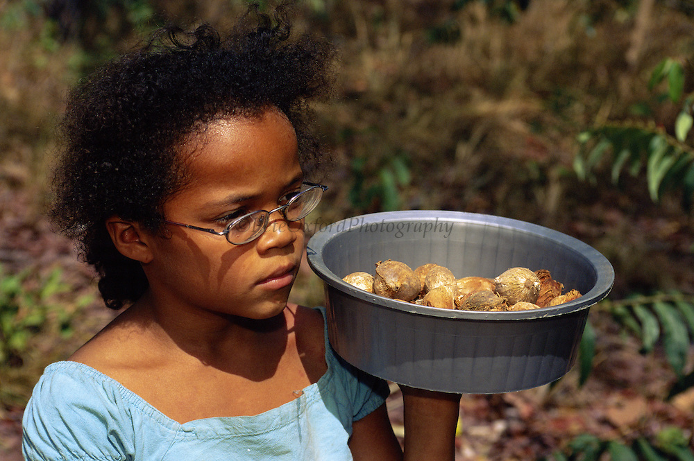 Mara D'Oliveira with Palm Nuts for Monkeys<br /> Brown Capuchin Monkeys return to an anvil sight and crack them open with rocks<br /> Cebus apella<br /> Cerrado Habitat, Piaui State.  BRAZIL.  South America