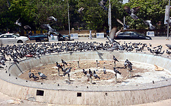May 30, 2017 - Pakistan - KARACHI, PAKISTAN, MAY 30: Pigeon flock over the dried fountain in search of water .during scorching sun, nearby Sindh High Court in Karachi on Tuesday, May 30, 2017. (Credit Image: © PPI via ZUMA Wire)