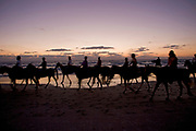 Silhouetted horse riders on the beach at sunset